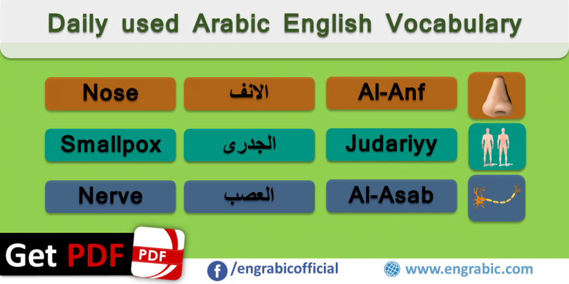 Arabic English Vocabulary for daily used conversation. Arabic English Vocabulary which helps learners to learn language. Arabic and English words with translation. Learn English from Arabic and Arabic from English.