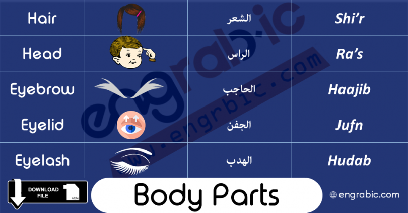 Body Parts in Arabic and English Vocabulary
