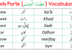 Parts of Body Vocabulary in Arabic for the learners.Parts of Body Vocabulary in English with translation in Arabic and Roman Arabic with PDF.