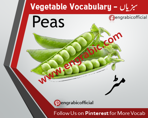 "This is a list of plants that have a culinary role as vegetables. ""Vegetable"" can be used in several senses, including culinary, botanical and legal. A comprehensive list of veggies from A-Z. Vegetables in English! List of vegetables with images and examples. Learn these vegetables names to increase your vocabulary words about vegetables. Get the most comprehensive list of vegetables, sorted alphabetically from A to Z. If you're looking for the best list, you'll find it here at the Gardening Channel."