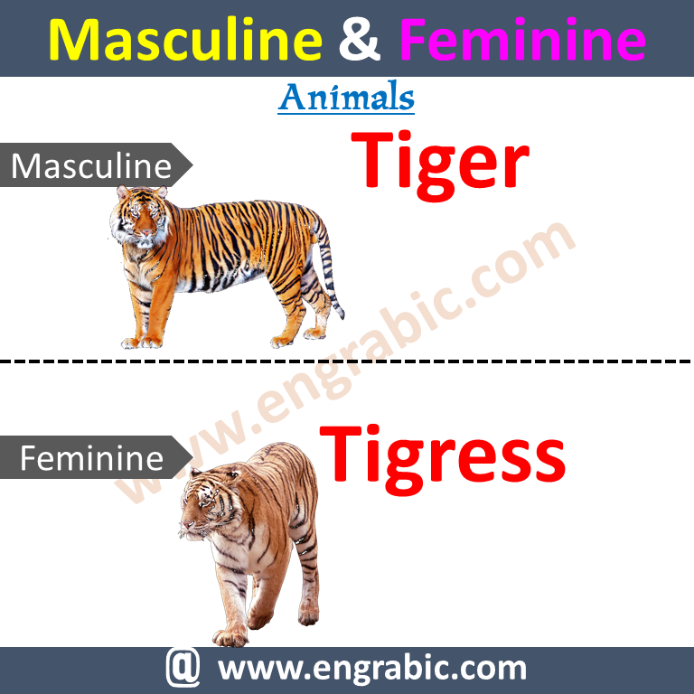 Male and FemaleMasculine Femininein EnglishListWithUrdu English For kids. Learn 100 examples ofmasculine and feminine listof genders pdf withUrdu/Hindi meanings. Learn Common Masculine and Feminine Words with Examples.