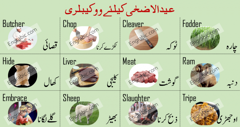 Here are the most important and commonly used English to Urdu Vocabulary Words on Eid ul Adha. In this lesson, we are gonna learn 20 vocabulary words that we often use on this Holy Day. Here is the list of Vocabulary Words