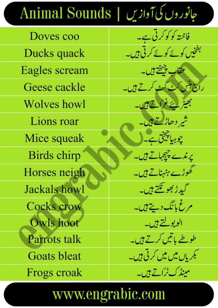 Animal Sounds in English and Urdu. Learn the all the Sounds of Animals in English with Urdu meanings. This lesson is also available in PDF form. Please go the bottom of Page and PDF is right there. Just click and get in your mobile phone. All the Animal Sounds List in One Lesson